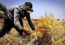 اعطای تسهیلات ۱.۵میلیارد دلاری اشتغال روستایی در سمنان