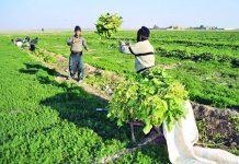 تعاونی همدان کشاورزی
